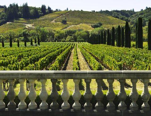 регистрация вино